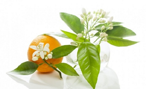 خواص درمانی بهار نارنج در طب سنتی